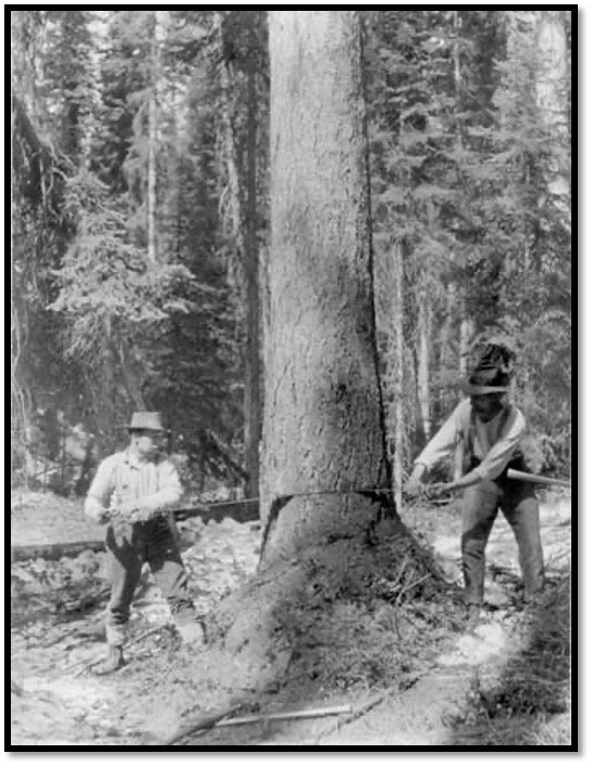 Two men sawing through a tree Photo United States Department of Agriculture - Forest Service