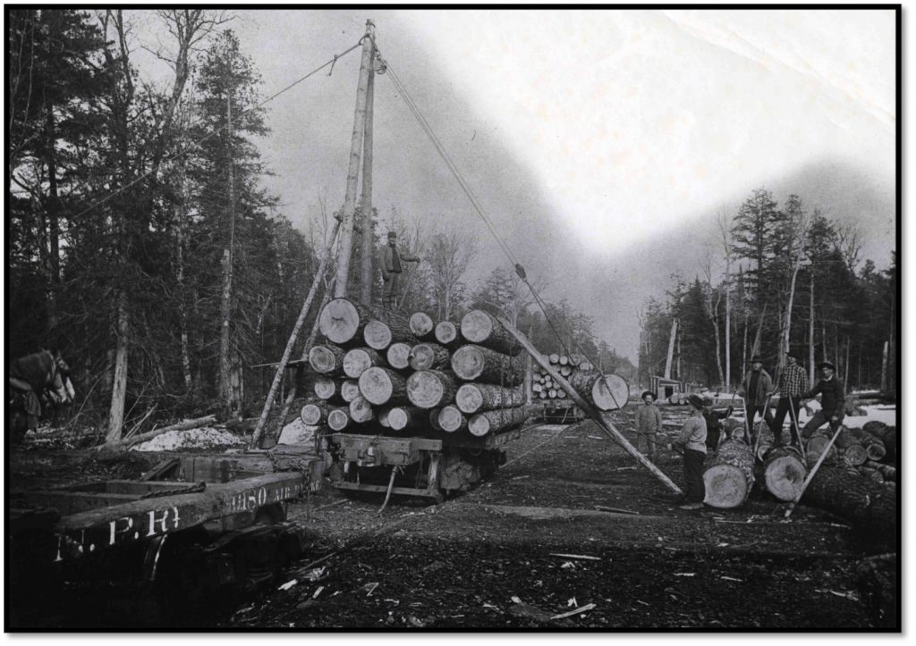 Timber hauled to the railroad on logging cars BHA 1980.4.143