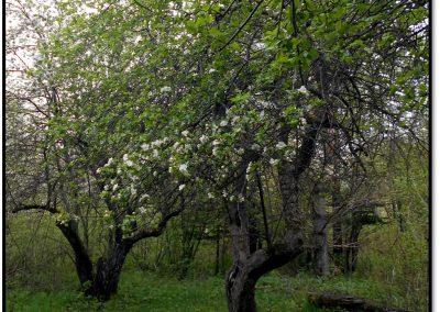 Salmo Trail Orchard