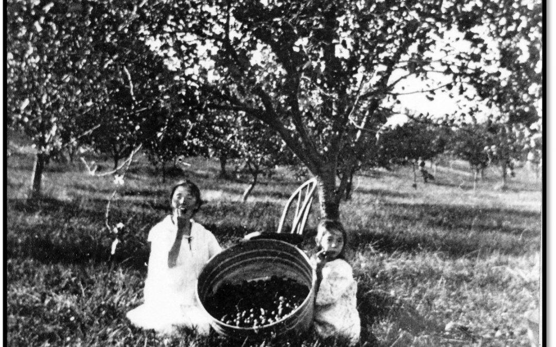 Farm Registrations – 1911