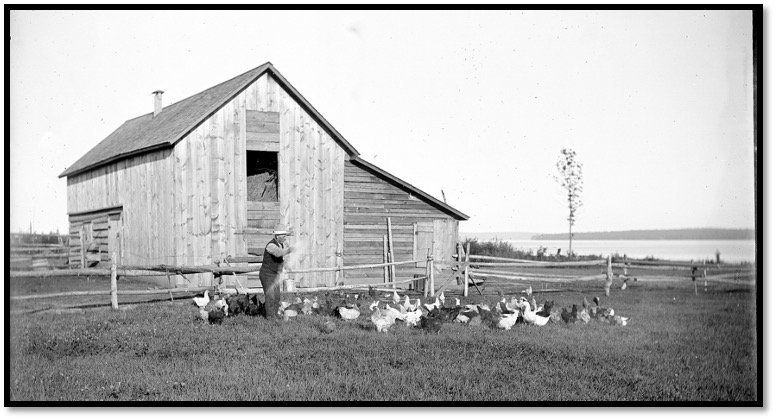 Louie Moe Feeding the Chickens Photo Emanuel Luick