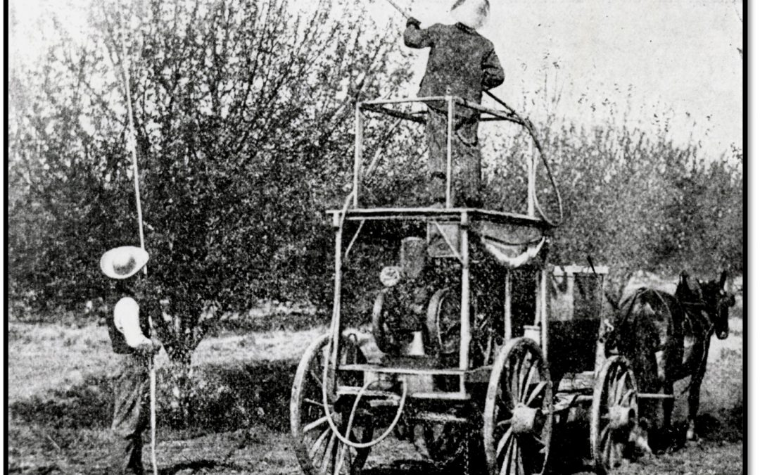 Orchard Care – 1909