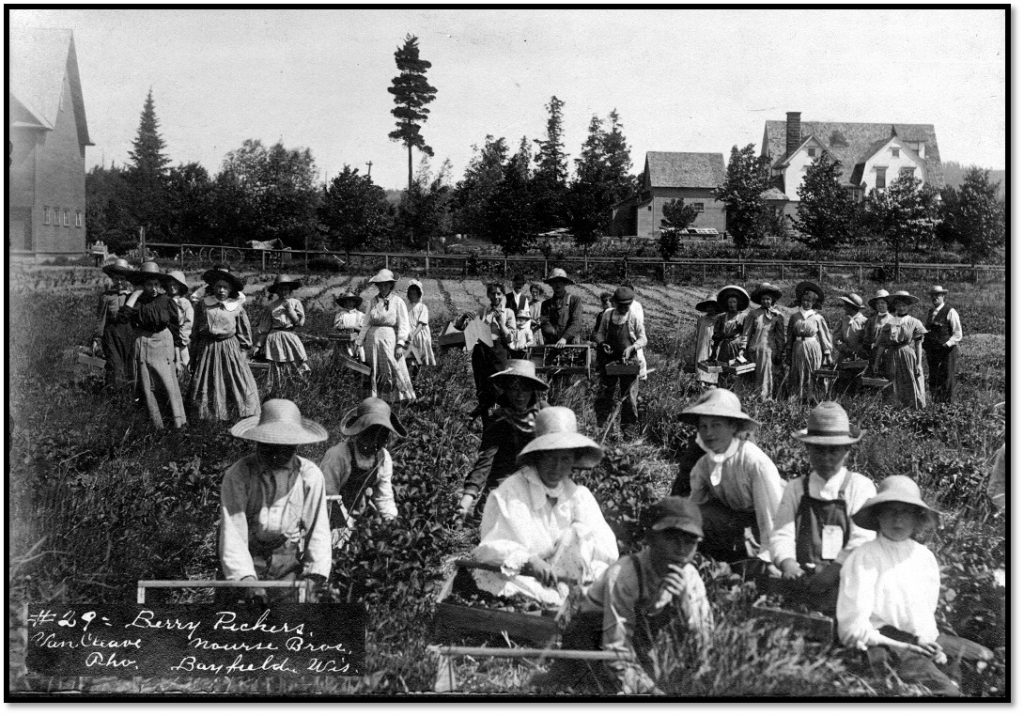 Field of Pickers from Superior Wisconsin Henry Van Cleave photo BHA 2008.16.94